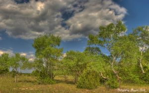 Hungarian landscapes. HDR-picture.(National Park) by magyarilaszlo