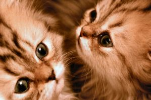 Both kittens by Fohat