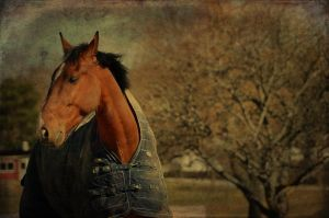 Country Horse by HenrikSundholm