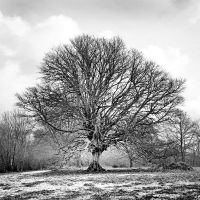 Tree 0475 by filmwaster
