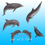 Dolphins by Shades-Of-Rage