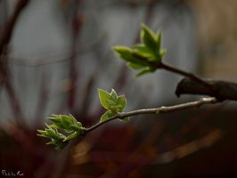 20 - Young leaves III ... by AnnaMagdalenaPe