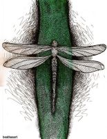 The dragonfly it ran away but it came back by eamanee