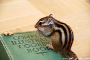 cooking chipmunk I by Philophobos