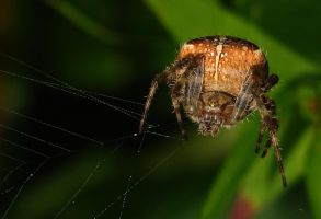 Hairy Spider by CanonSX20