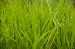 Tall Green Grass by DougitDesign