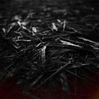 Bamboo leaves by Menoevil