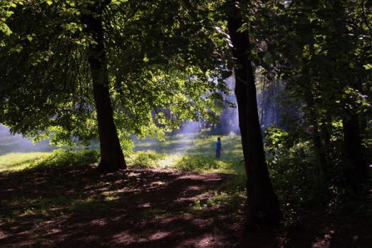 smoke rays and forest by realmugsy