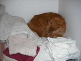 kitty in linen cupboard by me-and-elsie