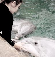 Dolphin Interaction by annlo13