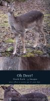 Oh Deer - Stock Pack by kuschelirmel-stock