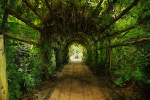 Green Tunnel by Trystad