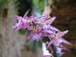 Purple Orchids by picworth1000wrds