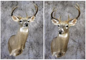 Upright and Alert by WeirdCityTaxidermy