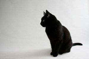 black cat on white by wallpaperchen