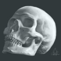 Skull Practice by Coquecigue