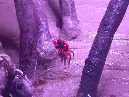 THE SMALLEST CRAB EVER!!!!!!!!! by vienna2000