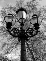 Trees behind street lamp by SilvieTepes