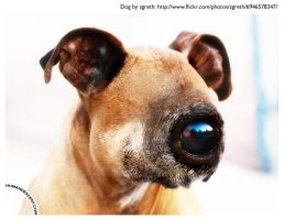 All seeing eye dog by HumanDescent