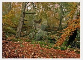 fontainebleau forest , France by bracketting94