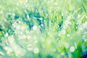 sparkling grass II by onixa