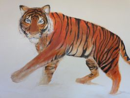 Tiger by Black-Hearted-Poet
