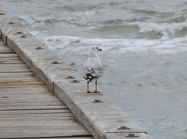 Seagull by scentedglitter