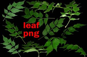 leaf png by roula33