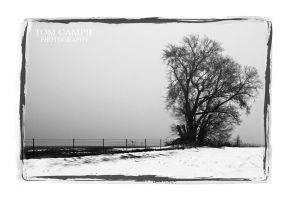 foggy tree by tominabox1