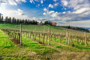 on our way in Tuscany by Rikitza