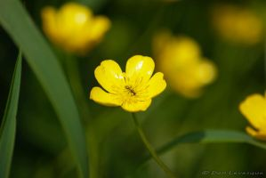 The Beauty of Flowers 2 by imonline