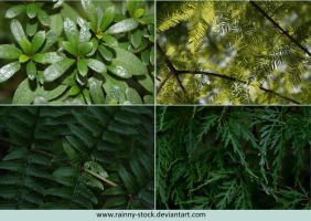 Leaves-STOCK- PACK 13578 by Rainny-Stock