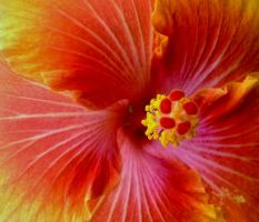 Bright Hibiscus by Oseltamivir