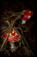 Amanita muscaria by MEW0