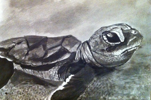 Sea Turtle Ink Wash Sketch by munjey86