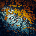 these autumn leaves by bailey--elizabeth