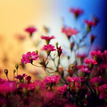 A Colorful Day by MarcoHeisler