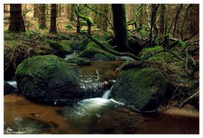 Mossy River by FlorentCourty