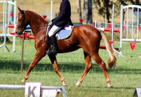 Dressageflaxen chestnut ridden by Chunga-Stock