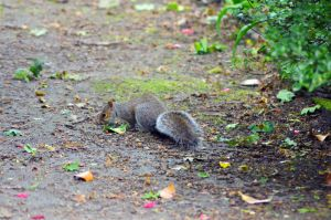 Squirrel 2 by Missmith91
