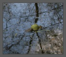 Toad water polo by saracaindica