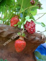 Beaded strawberry + real berry by The-Cute-Storm