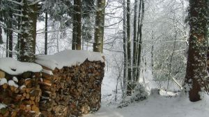 kindling in snow landscape by ingeline-art