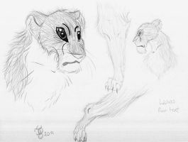 Lions fur test xD by TigaLioness