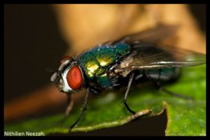 Green Fly by nithilien