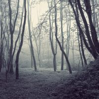 in the wood II by leenik