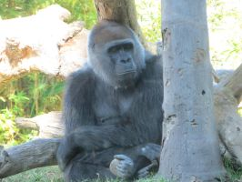Sleepy Gorilla by LMonicG1983