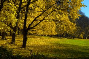 Tree in Yellow by caillteone