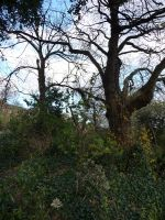 Merrion Square by caribbeanpirate