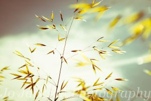 Meadow Grass 4 by Britwitch-1981